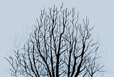 oisolerad limbstree Royaltyfri Fotografi