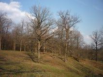 oisolerad skog Royaltyfri Foto