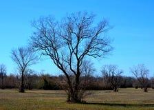 oisolerad tree Royaltyfri Foto