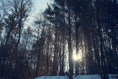 oisolerad treesvinter Royaltyfri Foto