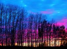 oisolerade solnedgångtrees Royaltyfria Foton