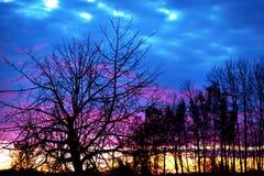 oisolerade solnedgångtrees Royaltyfria Bilder
