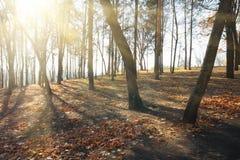 oisolerade sunbeamstrees Arkivbild