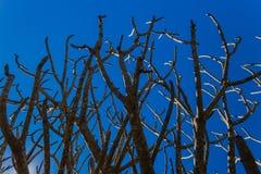 Oisolerade Treefilialer   Royaltyfri Bild