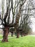 oisolerade trees Royaltyfri Bild