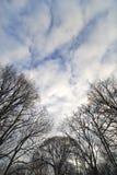 oisolerade trees Arkivbild