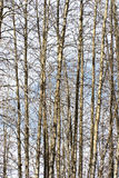 Oisolerade Trees Arkivbilder