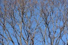 oisolerade trees Fotografering för Bildbyråer