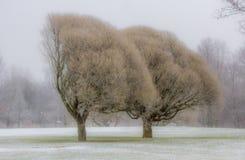 oisolerade trees Royaltyfria Foton