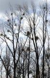 Oisolerade trees i den molniga skyen. Arkivfoton