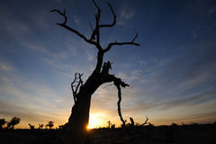 Oisolerade trees i höstgryning Arkivfoto
