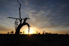 Oisolerade trees i höstgryning Royaltyfri Fotografi