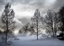 Oisolerade trees i snowstorm Fotografering för Bildbyråer