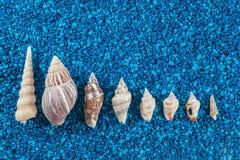 Oister en de zeeschelpen aranged op blauwe achtergrond Stock Afbeelding
