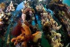 Oister farm Oosterschelde Netherlands. Underwater Stock Photo