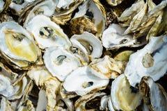 Oister shells - leftovers Stock Photo