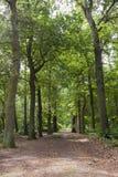 Oisterwijkse Bossen en Vennen, Oisterwijk lasy i Fens, zdjęcia stock