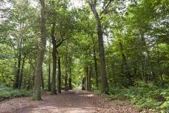 Oisterwijkse Bossen en Vennen, Oisterwijk skogar och kärr fotografering för bildbyråer