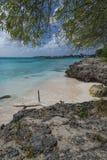 Oistin海湾巴巴多斯印度西部 免版税库存图片