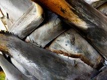 Ojämn palmträdstam Royaltyfri Fotografi