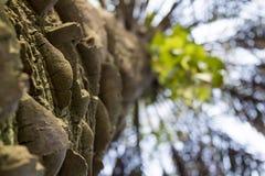 Ojämn palmträdstam underifrån royaltyfri fotografi