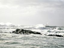 Ojämn Stillahavskusten Arkivfoton