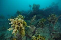 Ojämn undervattens- rev med ogräs royaltyfri fotografi