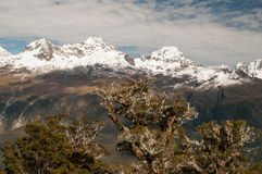 Ojämna Darran Mountains från det Routeburn spåret fotografering för bildbyråer