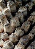 Ojämnt knubbigt texturerat palmträdskäll i Islamorada i de Florida tangenterna Royaltyfria Foton