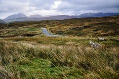 Ojämnt landskap på ön av Skye - Skottland, UK Royaltyfria Bilder