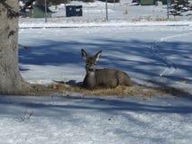 Oj hjortar skulle du slå en posera fotografering för bildbyråer