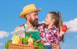 Ojca i c?rki chwyta ?niwa koszykowi warzywa Uprawia? ogr?dek i zbiera? Rodziny rolny poj?cie Tylko organicznie i obraz stock