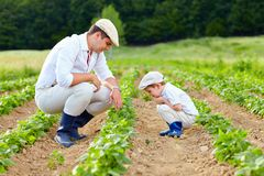 Ojca i syna ogrodnictwo na ich farmie Zdjęcia Royalty Free