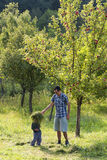 Ojciec i dziecko w jabłczanym sadzie Obrazy Royalty Free