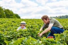 Ojciec i mały syn na truskawce uprawiamy ziemię w lecie Fotografia Stock