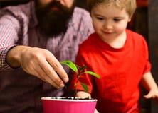Ojciec i syn Ojca dzień Kwiat opieki podlewanie Glebowi użyźniacze Rodzinny dzień charcica Brodaty mężczyzna i chłopiec zdjęcie stock