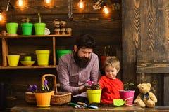 Ojciec i syn Rodzinny dzień charcica szczęśliwe ogrodniczki z wiosna kwiatami Kwiat opieki podlewanie Glebowi użyźniacze zdjęcie royalty free