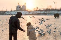 Ojciec i syn w zimy karmieniu ptaki Obraz Royalty Free