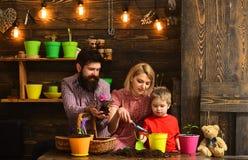 ojciec i syn z matką Rodzinny dzień charcica szczęśliwe ogrodniczki z wiosna kwiatami Kwiat opieki podlewanie Ziemia zdjęcie stock