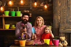 ojciec i syn z matką Rodzinny dzień charcica szczęśliwe ogrodniczki z wiosna kwiatami Kwiat opieki podlewanie Ziemia fotografia stock