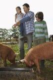 Ojciec Z dzieciakami Ogląda świnie Karmi Wewnątrz Sty fotografia stock