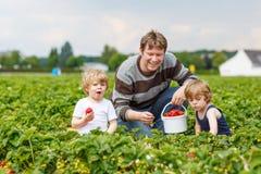 Ojcuje i dwa chłopiec na organicznie truskawki gospodarstwie rolnym Obraz Stock