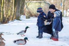 Ojcuje i dwa małej rodzeństwo chłopiec karmi kaczki w zimie. Fotografia Royalty Free