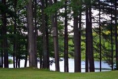 Ojeada del lago a través de los pinos Foto de archivo