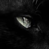 Ojo de gato Imagen de archivo