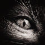 Ojo de gato del bebé blanco y negro Foto de archivo