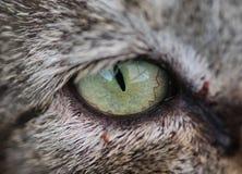 ojo de gato verde Fotografía de archivo