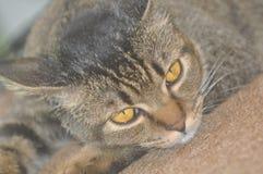 Ojo de gatos Fotografía de archivo libre de regalías