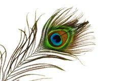 Ojo de la pluma del pavo real Fotografía de archivo