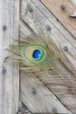 Ojo de la pluma del pavo real Imágenes de archivo libres de regalías